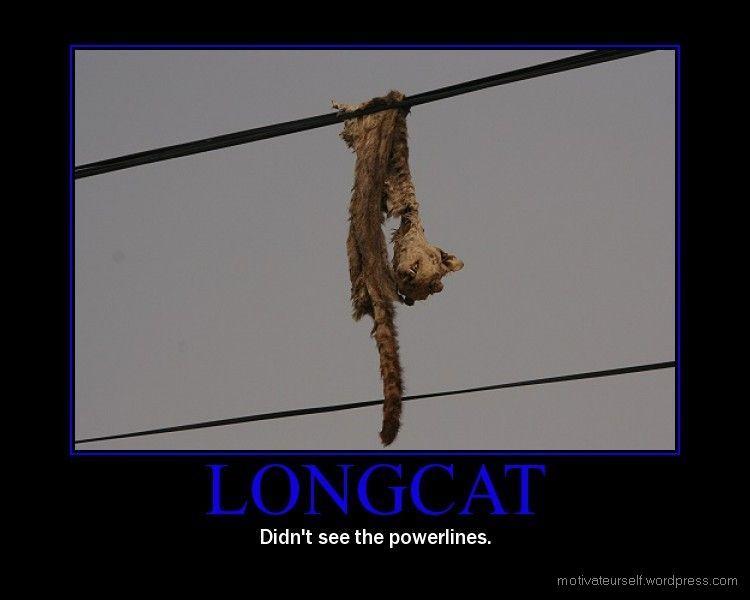 [Imagen: longcat.jpg]