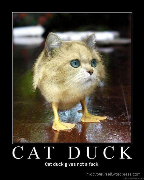 http://motivateurself.files.wordpress.com/2008/10/cat-duck.jpg